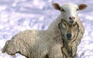 Cazadebunkers vigila a los lobos con piel de cordero
